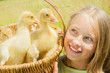 Happy little girl holding the basket of goslings