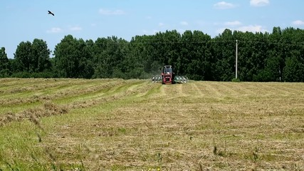 Agricultural work in the field. Tractor collecting mown hay