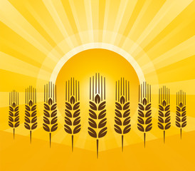 grain background with sun rays