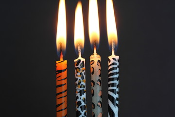 Animal print candles lit