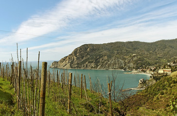 Vineyard at the sea.