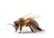 Obrazy na płótnie, fototapety, zdjęcia, fotoobrazy drukowane : abeille