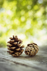 Two pine cones on wooden table
