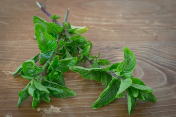 Mint on wooden table