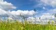 canvas print picture - Blumenwiese im Frühjahr
