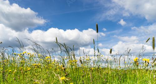 canvas print picture Blumenwiese im Frühjahr