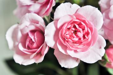 Blumen als Deko in Ihrem Haus