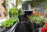 Mix of beautiful vivid terrace flowers