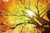 Herbstbäume. Naturfarbe.