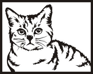 cat black white vector