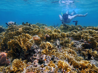 Man underwater snorkeling in a shallow coral reef