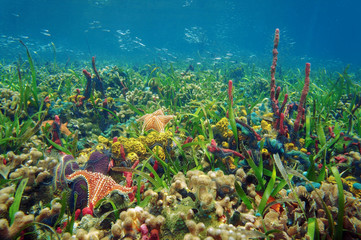 Thriving underwater marine life in tropical seabed