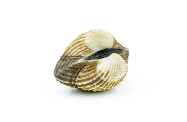 Raw, fresh cockle over white background