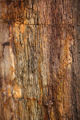 Closeup of petrified tree trunk as a textured colorful backgroun