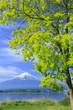 富士と新緑
