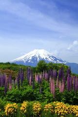 富士とルピナス