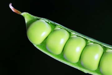 Detail of the green Peas