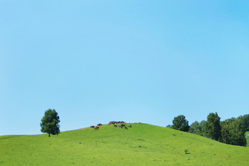 Beautiful summer landscape with green hills and herd of horses