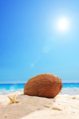 Fallen coconut in the sand of a beach on a sunny day