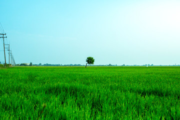 Landscape of the field in tranquil moment
