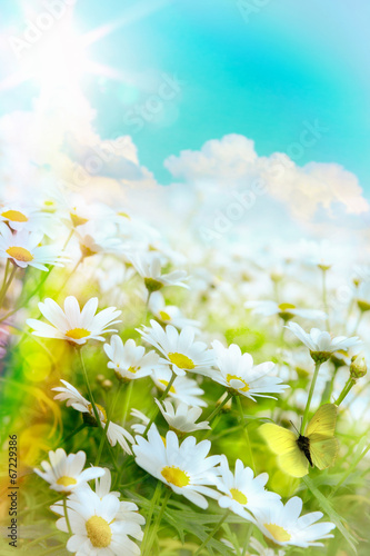 Deurstickers Madeliefjes Art high light; Bright summer flowers Natural background