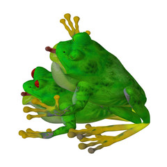 Animal love: two frogs in love