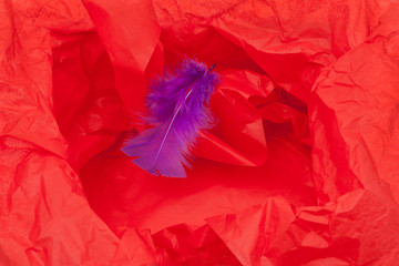 Red Paper and Feather