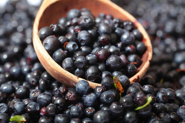 wild berry blueberries in a wooden spoon