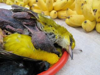 bird poor