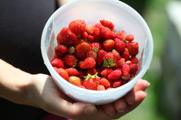 garden and wild berry and strawberry in hands