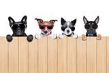 big row of dogs