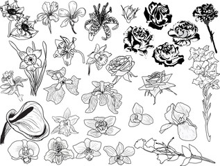 large set of black flowers sketches
