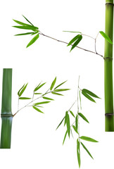 three green bamboo branches isolated on white