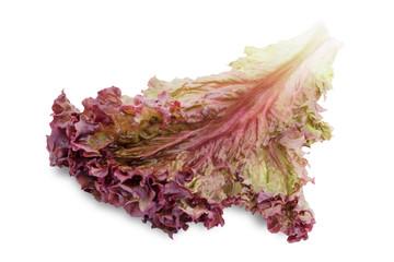 Fresh leaf lettuce on white background