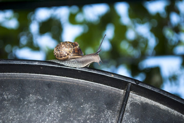 Snail on a Table