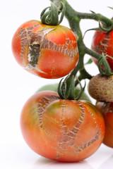 成長不良のトマト