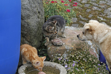 Katzenwelpen mit Hund