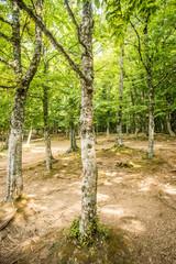 Umbra forest - Gargano Puglia Italy