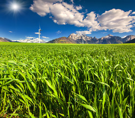 Electric wind turbines in the field of winter wheat in the Alps