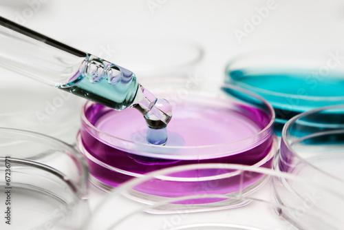 Pipette with drop of color liquid and petri dishes - 67236771