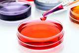 Pipette with drop of  liquid and petri dishes