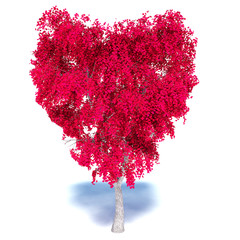 Heart Tree on white background