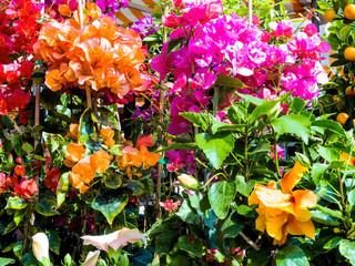 Verschiedene Schnittblumen, Hintergrund