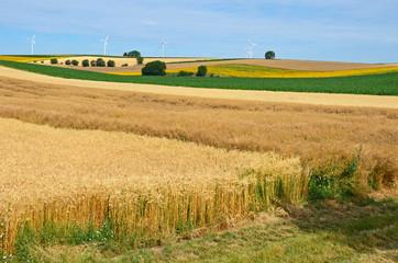 getreidefelder im sommer