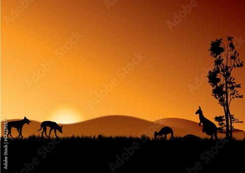 dingo and kangaroos in sunset