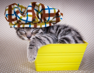 Little kitten sleeping in an yellow box in funny hat