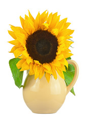 Still life with sunflower in vase isolated on white background.