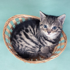 Top view of a cat  in a basket on baby blue background