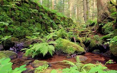 wilde Schlucht im Schwarzwald