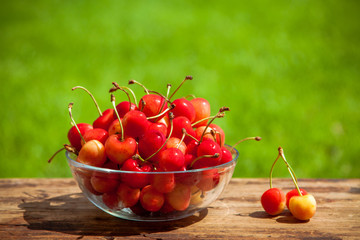 Rainier Cherries in a bowl on green grass